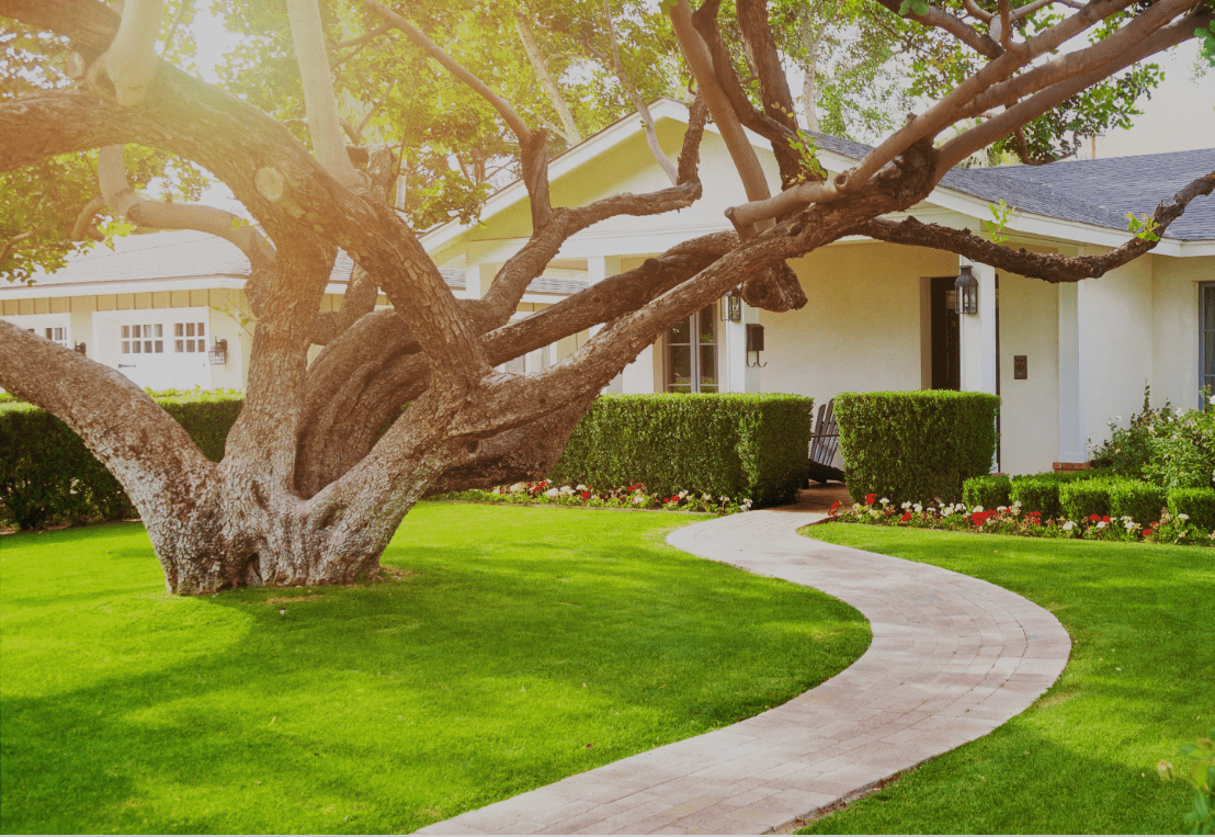 residential tree services 1